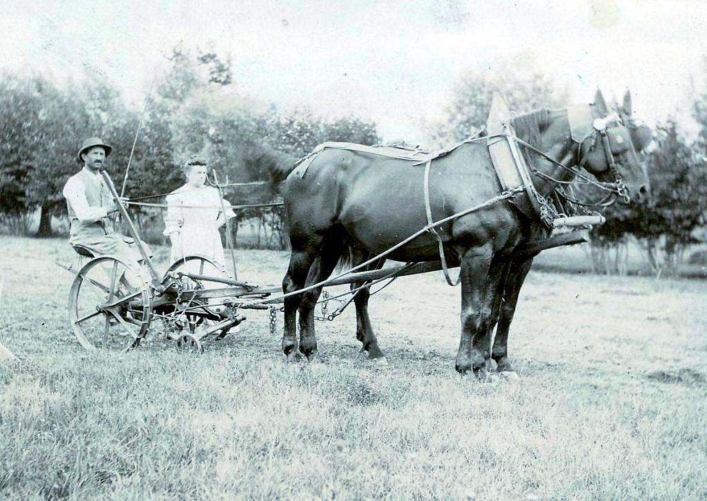 1905 La première faucheuse. X, Mme Monnier Ducastel. Dans le pré, au fond le ruisseau, photo prise en direction du N-O