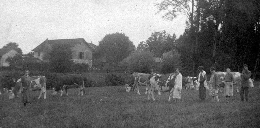 Le troupeau et la ferme, 1925